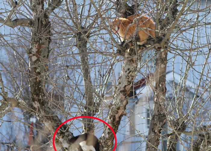 PINGLE: Her er Nasse på vei ned igjen etter å ha delt ut et halvslapt dask etter katten i treet.