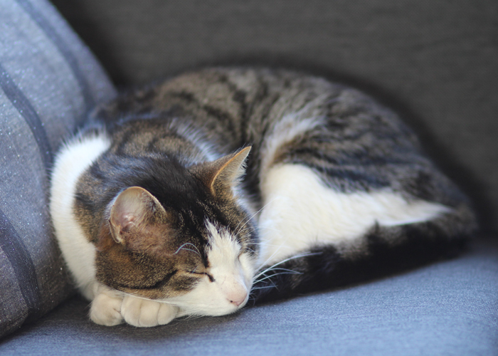 KATTELIV: Digg å bikke på sofaen når det er kuldegrader utenfor.