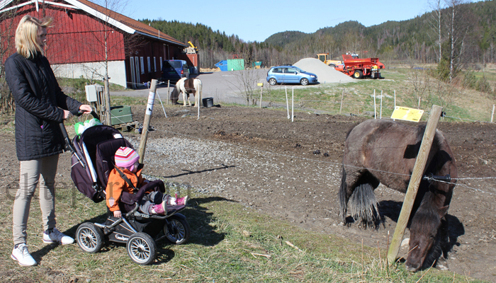 HEST: Utenfor var det hester. Like greit, for jeg er ganske redd dem selv.