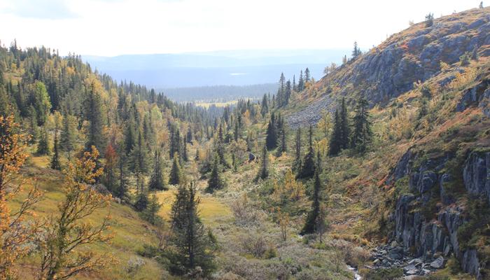 SKAU: Masse skog og sånn. Flott det.