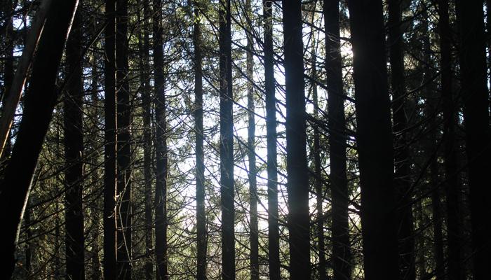 SKUMMELT: Det kan være litt skremmende i skogen også.